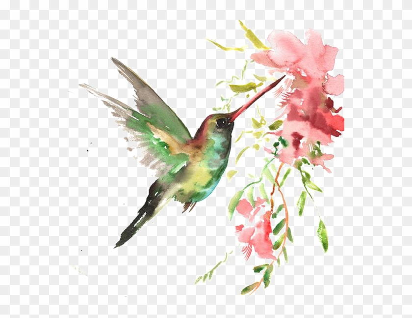 Watercolor Bird Watercolor Art Hummingbird Free Transparent Png