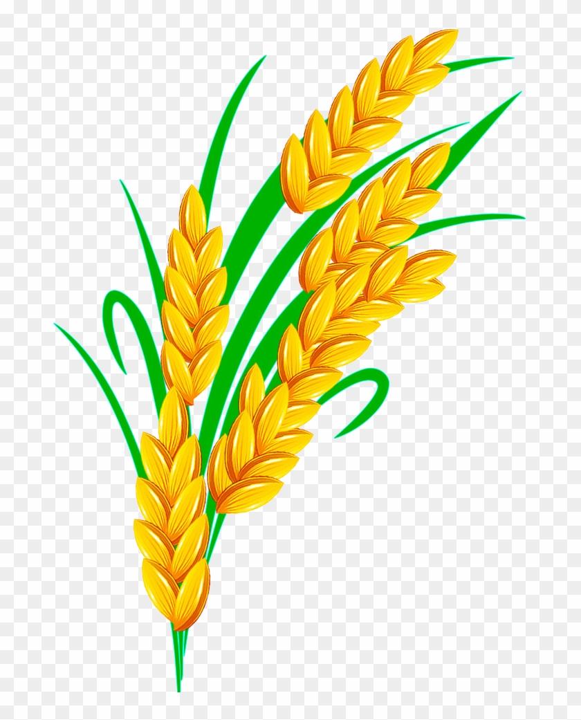 Rice Euclidean Vector - Rice Grain Vector Transparent ...