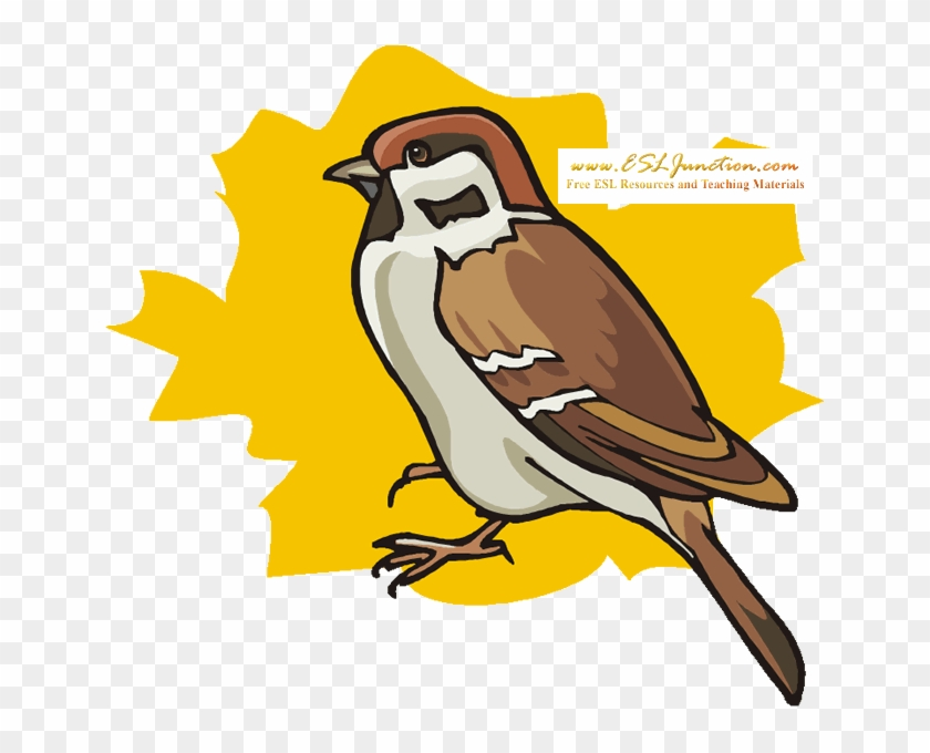 Sparrow - Winter Animal Coloring Pages #904494
