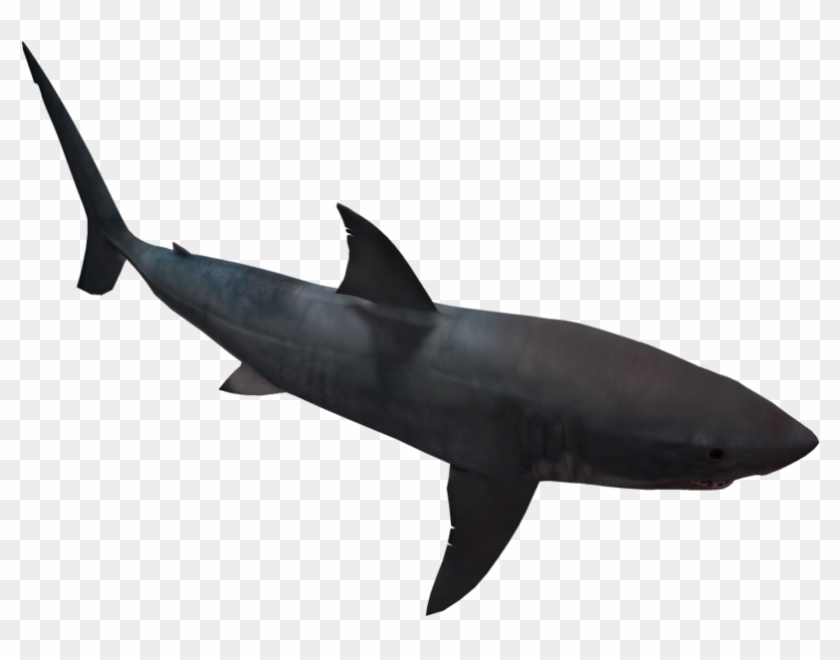 Great White Shark 05 By Wolverine041269 On Clipart - Great White Black Silhouette #18135