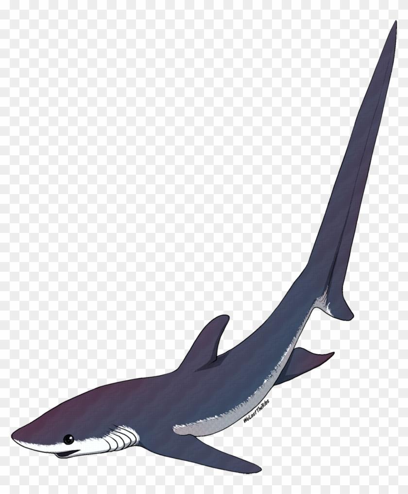 Thresher Shark Tattoo - Thresher Shark Silhouette Png #18145