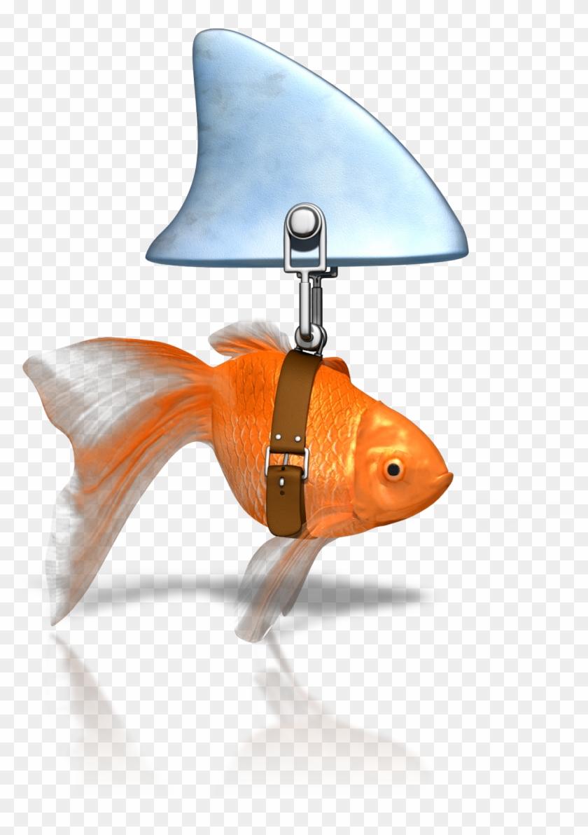 Shark Fin Soup Goldfish Shark Finning Clip Art - Shark Fin Soup Goldfish Shark Finning Clip Art #18289