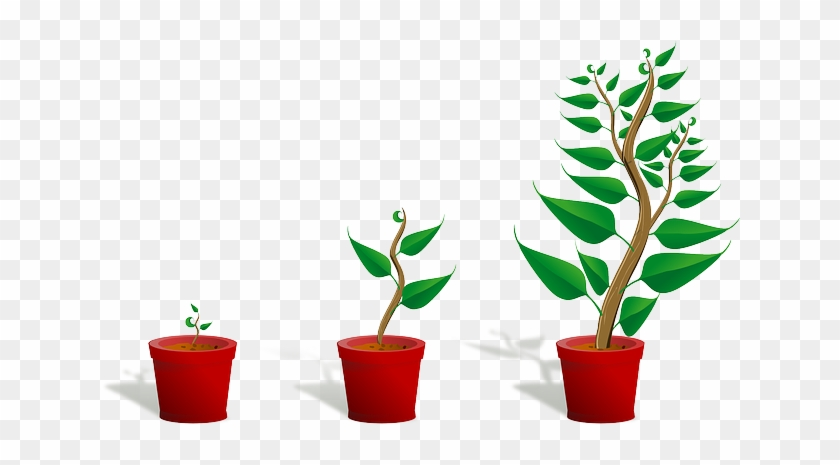 Sapling, Plant, Growing, Seedling, Growth, Potted Plant - Getting To Know Plants #18285