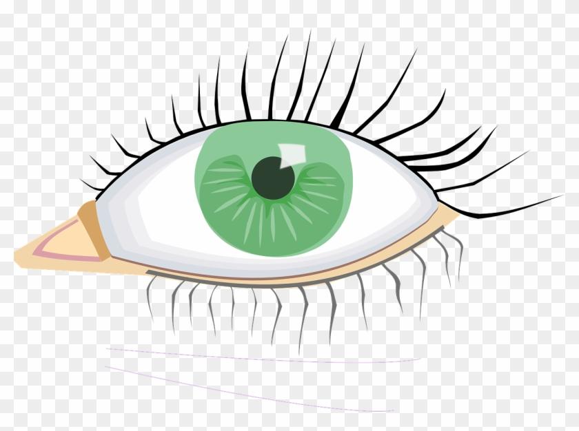 Eye Clip Art #18307
