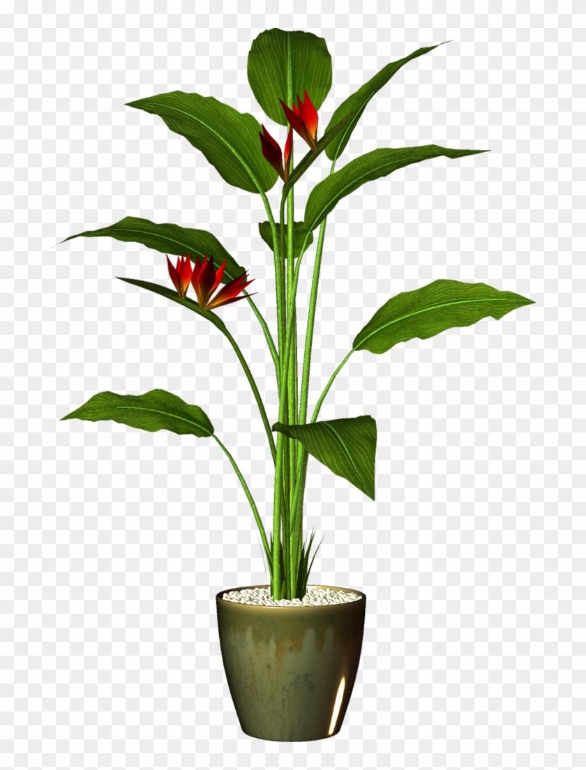 Transparent Pot Plant Png #18538
