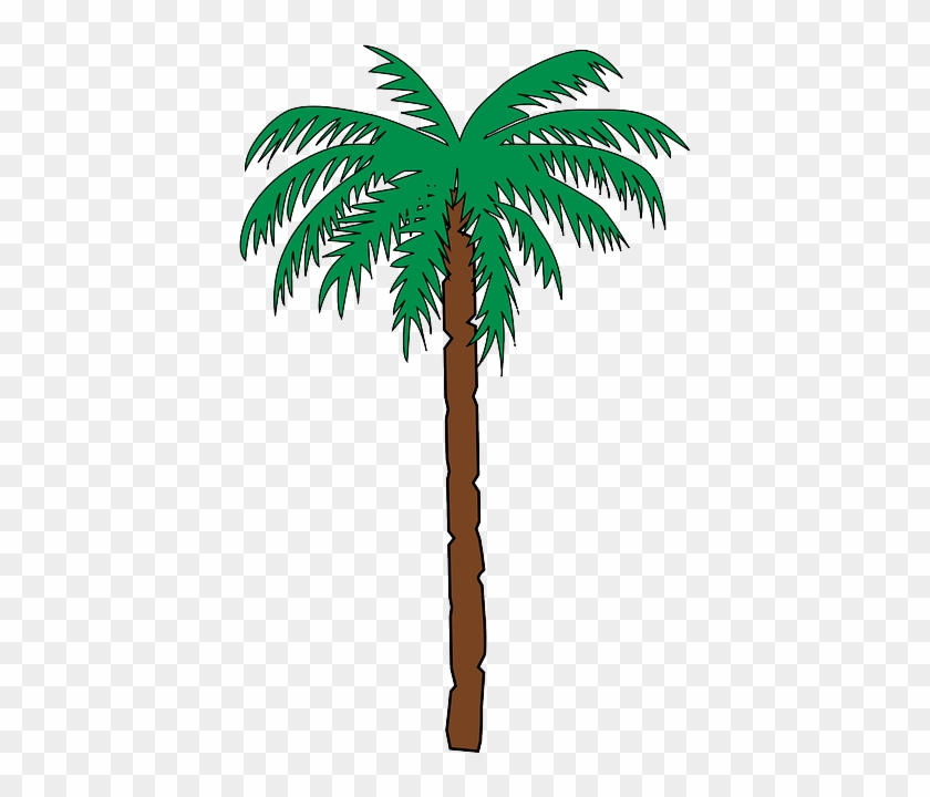 Tall Palm Tree - Haiti Coat Of Arms #18541