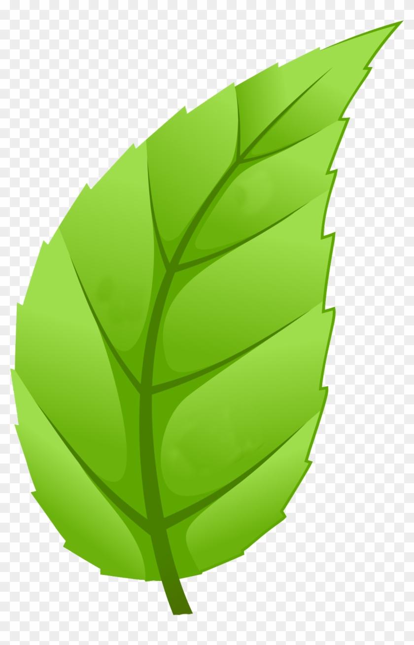 Healthy Communities - Leaf Of Tree Png #18544