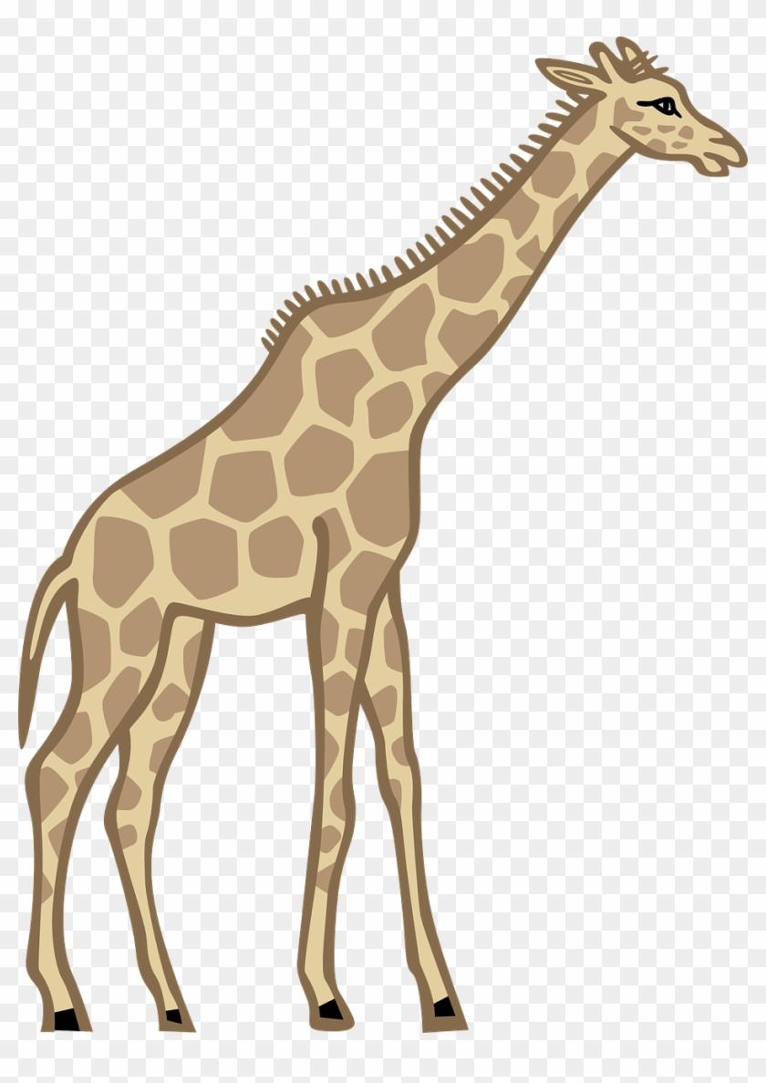 Giraffe Beetle Images - Tall Clipart #19330