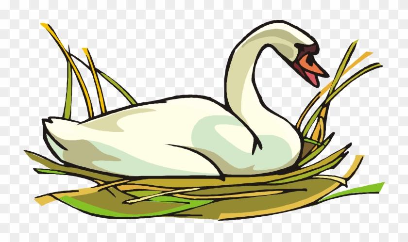 Swan Clip Art #19427