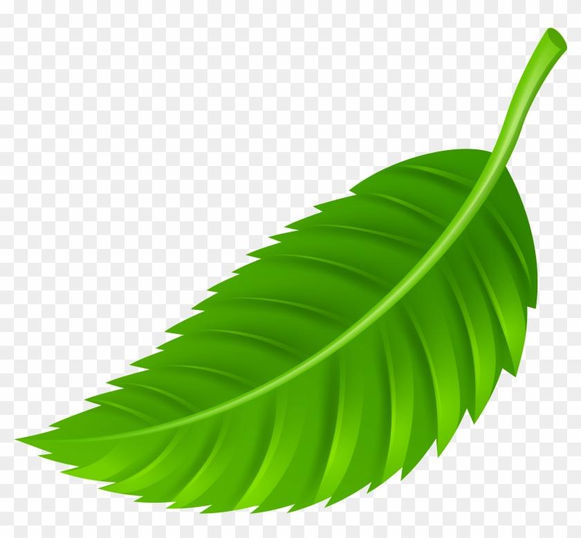 Leaf Png Clip Art - Leaves Png #20048