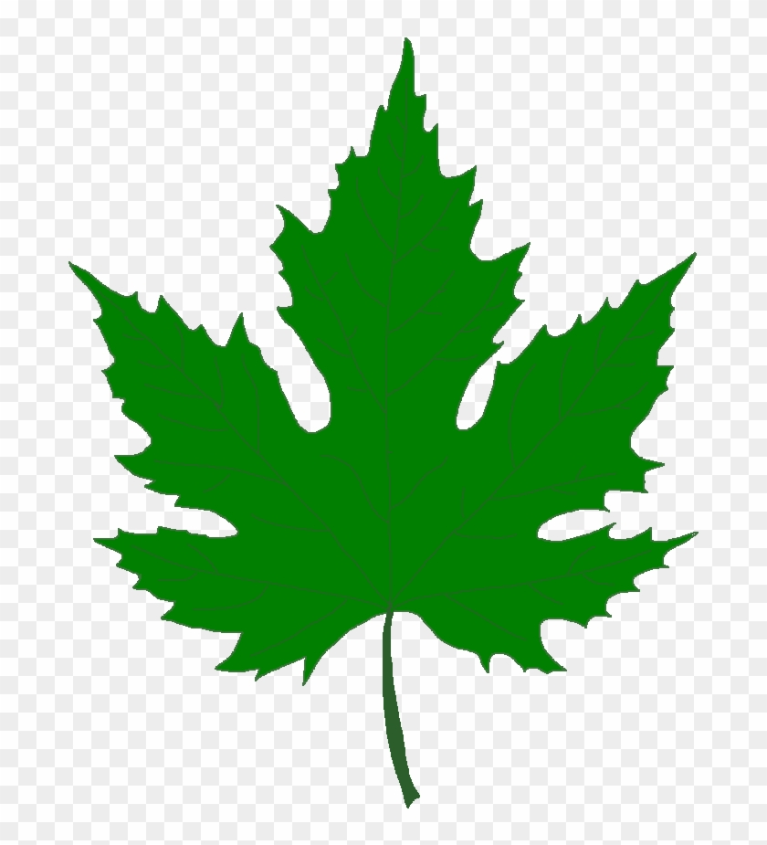 Pin Leaf Clipart Sycamore Tree - Silver Maple Leaf Clip Art #20154