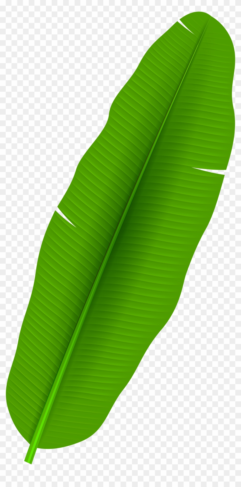 Exotic Palm Leaf Transparent Png Clip Art - Banana Leaf Clipart Png #20174