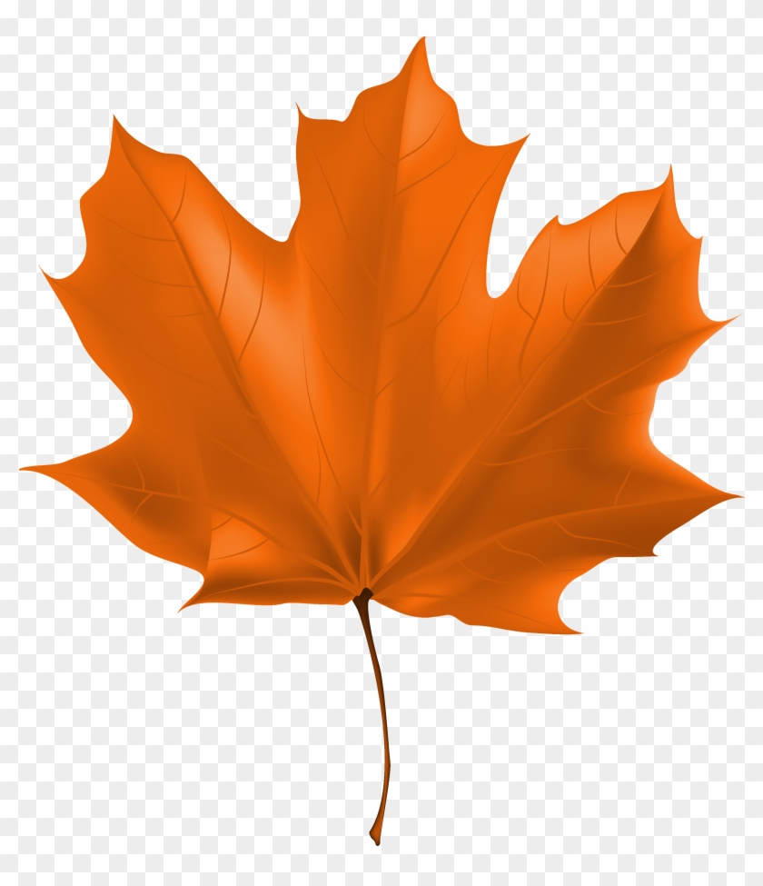 Fall Leaf Clipart Png #20243