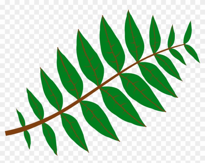 Net » Clip Art » Pinnate Leaf Flower Valentine Svg - Leaf Clip Art #20308