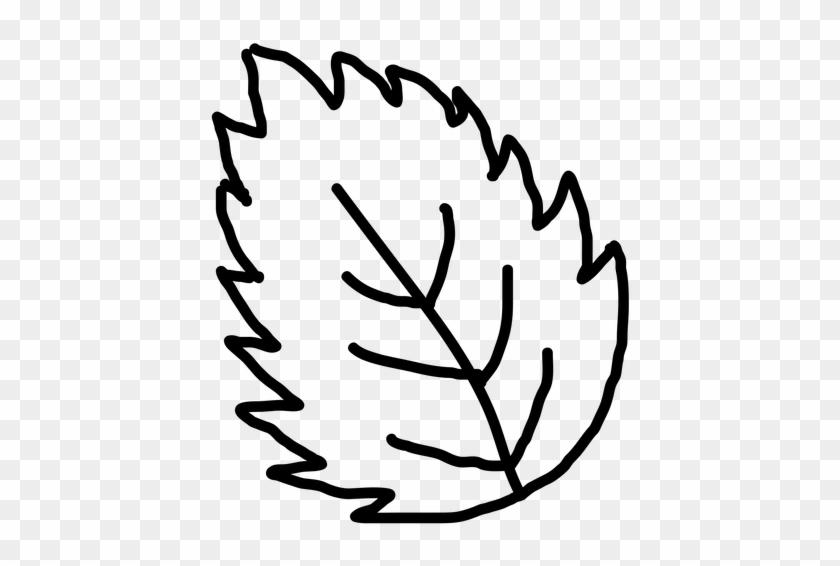 Hand Drawn Leaf Outline Transparent Clip Art - Outline Image Of Leaf #20490
