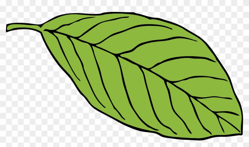Green Leaf Oval Shape Chlorophyll Lush Foliage - Cartoon Images Of Leaf #20552