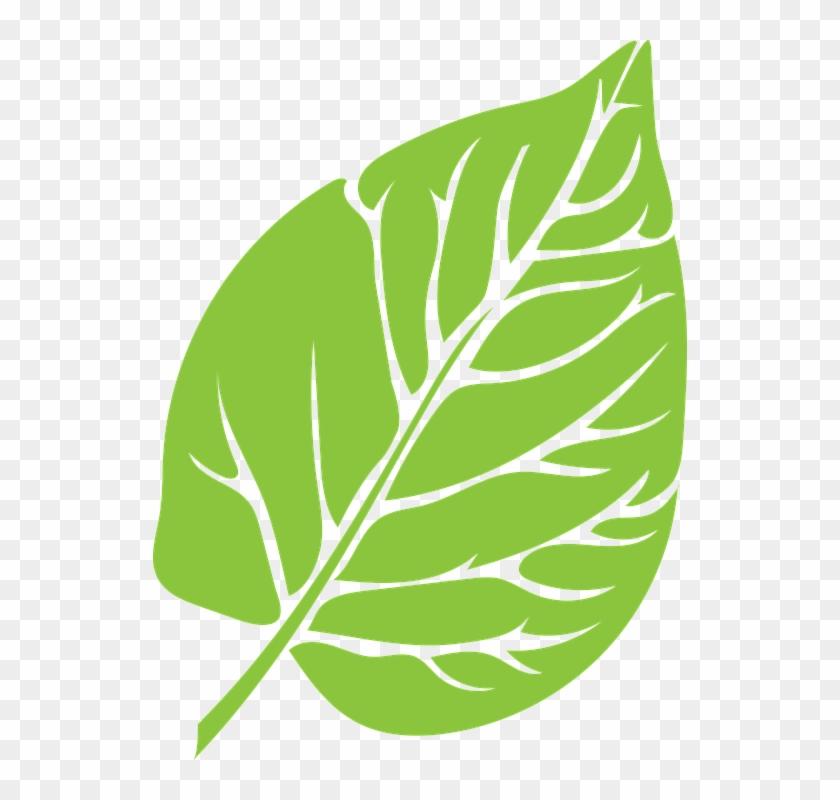 Leaf Green Lush Growth Green Leaf Green Le - Vectoresd E Arboles Animados Con Circulos #20611