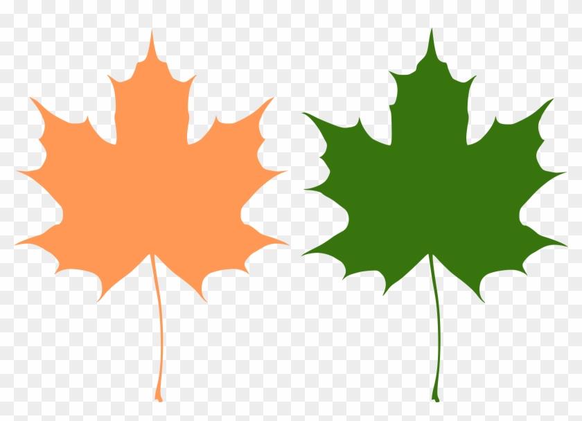 Big Image - Maple Leaf Vector Free #20647