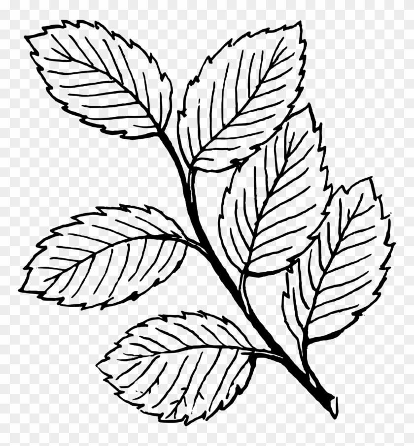 Mint Leaves Clip Art - Leaves Clipart Black And White #20756