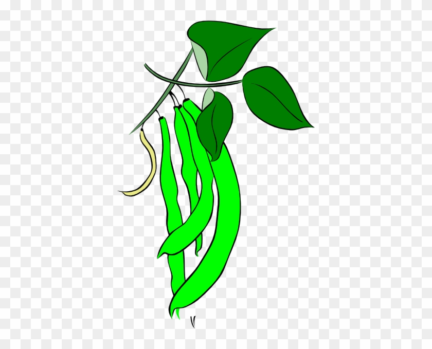 Green Bean Plant Clipart - Cartoon Picture Of Green Beans #20780