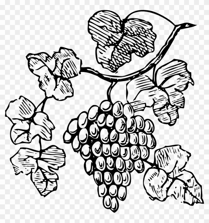 Clip Arts Related To - Grapes Clipart #21021