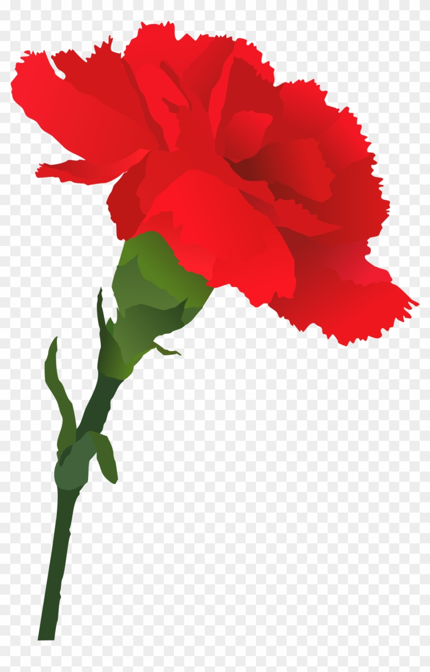 Carnation Cliparts - Carnation Clipart Png #21033