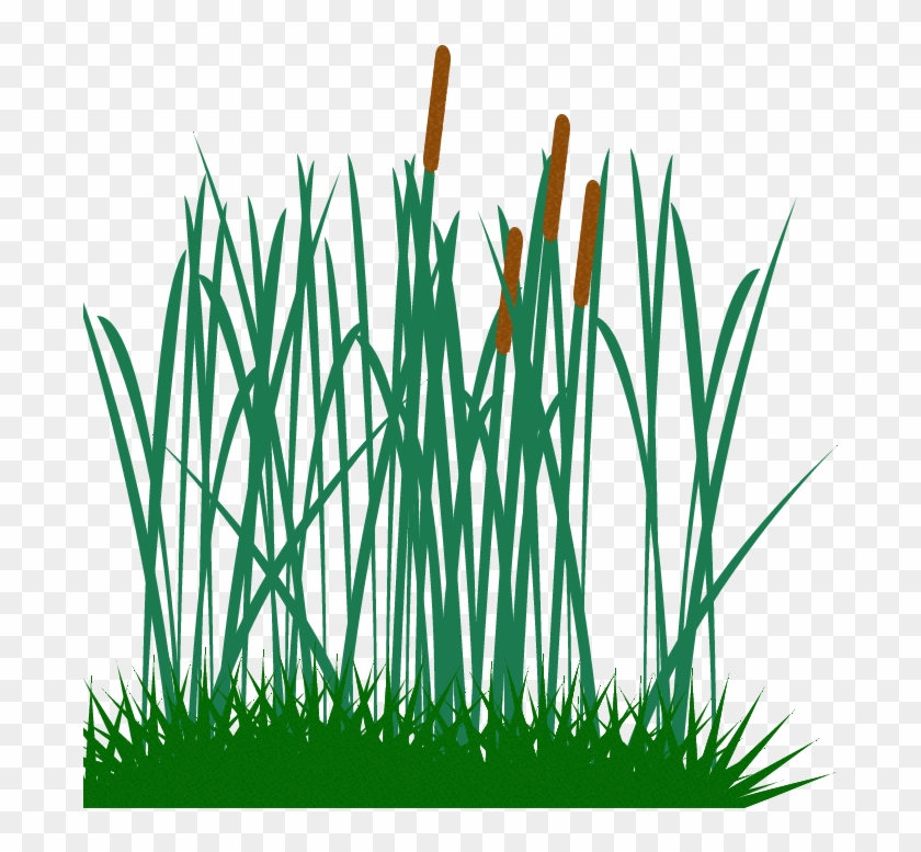 Tall Grass Clip Art Png Image - Tall Grass Vector #21324