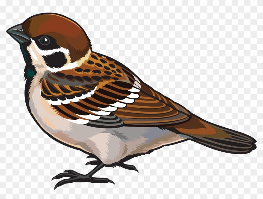 Sparrow Png Clipart - Sparrow Images Clip Art #21771