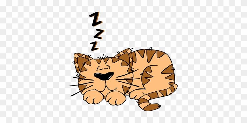 Cat Sleeping Cute Kitten Sleepy Asleep Fel - Cat Sleeping Clipart #21942