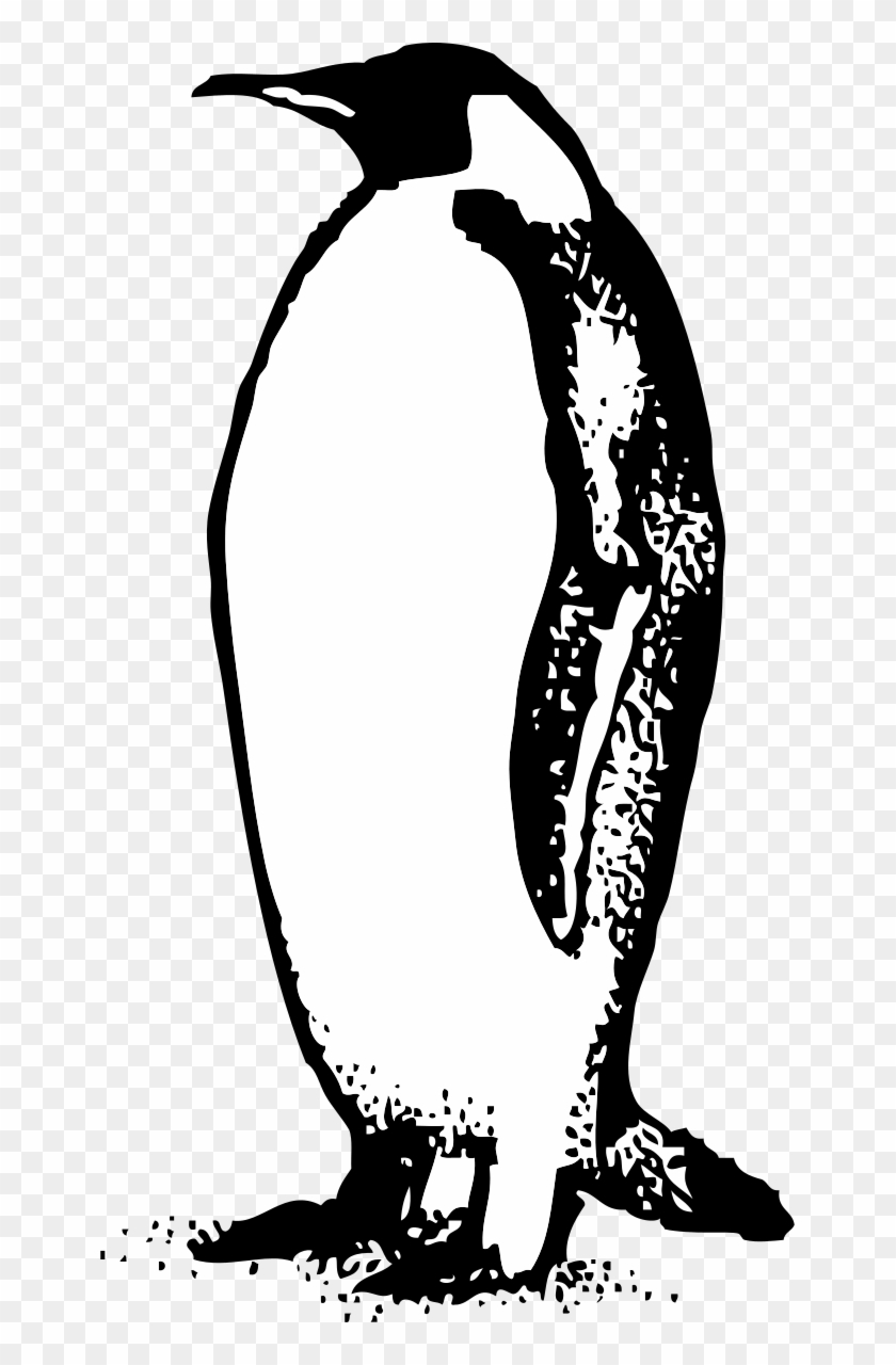 Penguin Black And White Penguin Clip Art Black And - Black And White Penguin Clip Art #22443