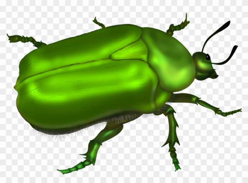 Green Beetle Vector By Roula33 On Deviantart - Green Bug Clipart #22804