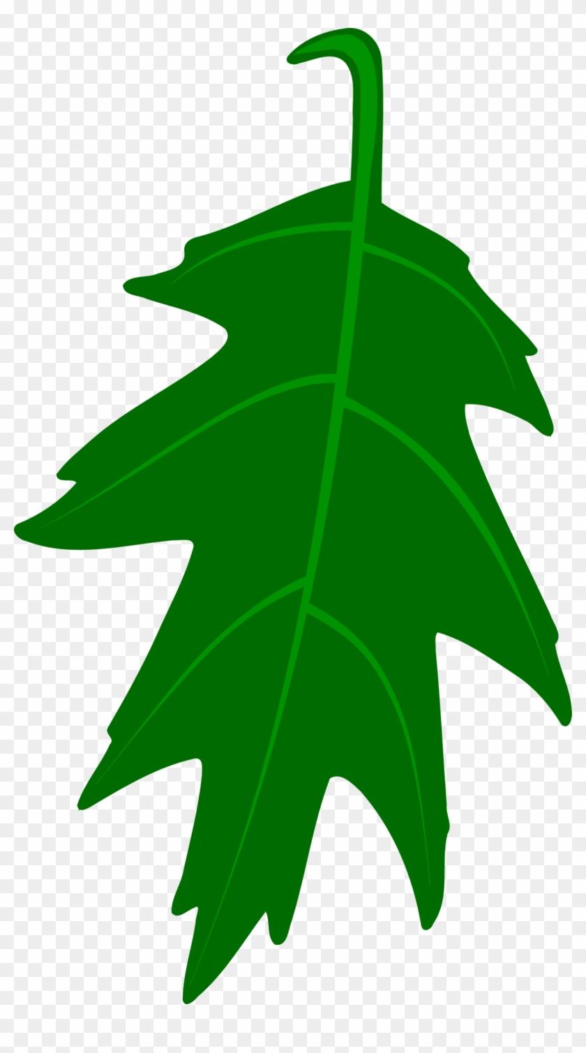 Ivy Clipart Big Leaf - Green Oak Leaf Clip Art #23055