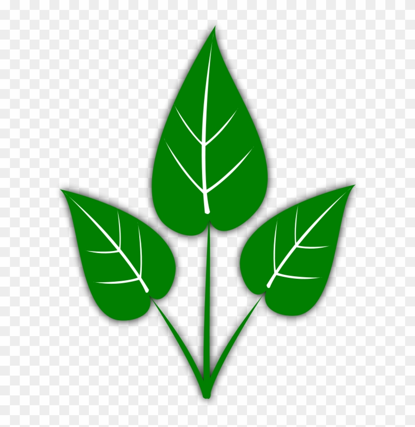 Leaf Free Leaves Clipart Free Clipart Graphics Images - Hydroponics Gardening: How To Start Hydroponics System, #23299