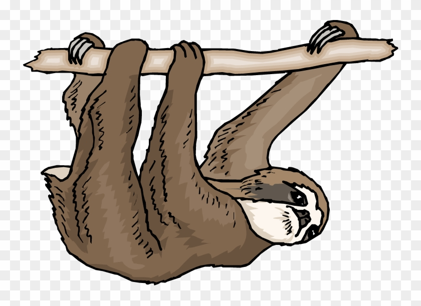 Sloth Clipart - Three Toed Sloth Clipart #23348