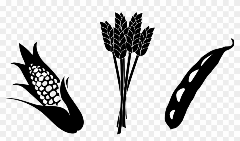 Clip Arts Related To - Corn And Soybean Clipart #23751