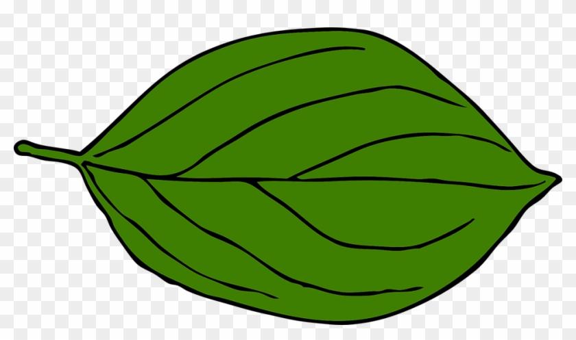 Green Pumpkin Leaf Clipart Free Clipart Images - Leaf Drawing Clip Art #24127