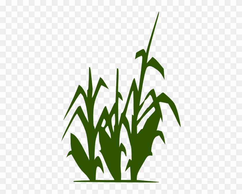 Corn Stalk Clip Art - Lacto-fermentation Of Human Excreta For Agricultural #24220