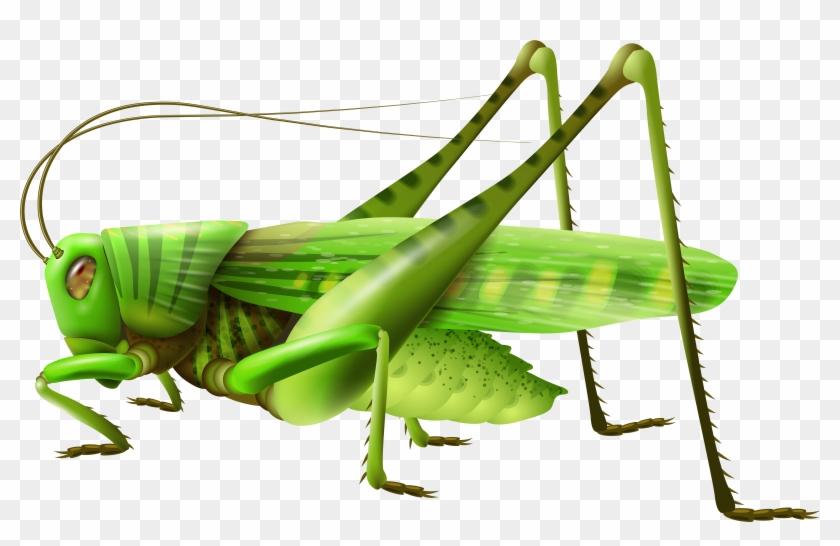 Grasshopper Png Clip Art - Grasshopper Clipart Png #25015