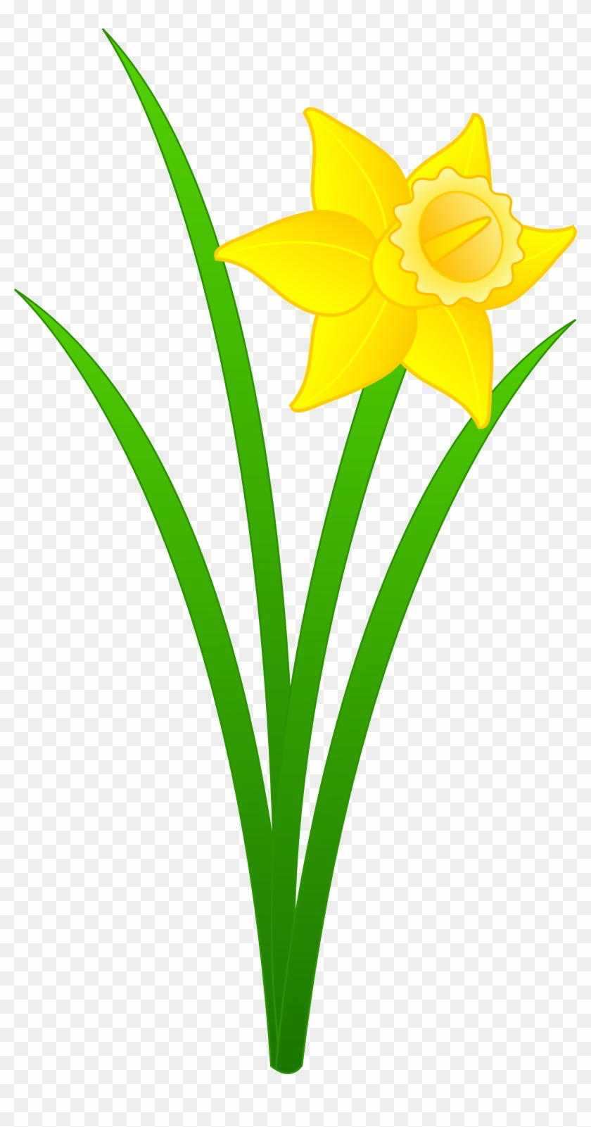 Daffodil Flower Clip Art - Daffodil Flower Clip Art #25077
