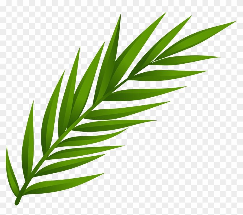 Leaf Png Clip Art - Leaf Png Clip Art #25117