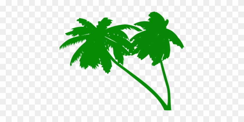 Palms, Coconut Tree, Coconut Palms - Green Palm Tree Vector #25296