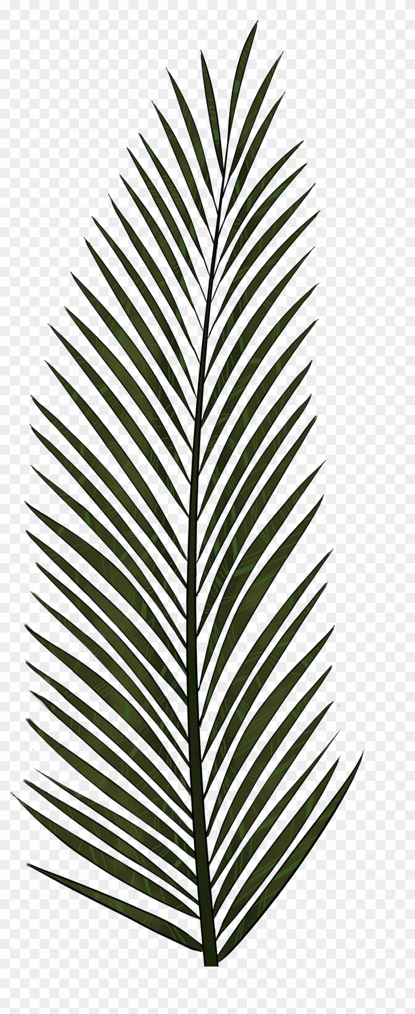 Palm Leaf Png Textures And Style Radin Mas - Palm Trees #25341