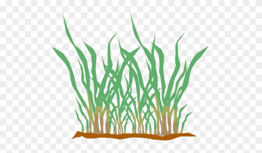 Selecting The Right Type Of Grass Can Be A Confusing - Grass #25383