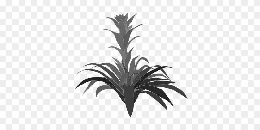 Clip Art, Flor, Flora, Flower, Nature - Clip Art #25392