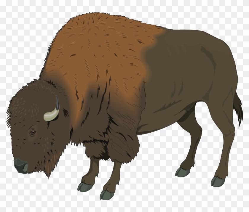 Large Bison Eating Grass Clip Art - Bison Clipart Png #25489