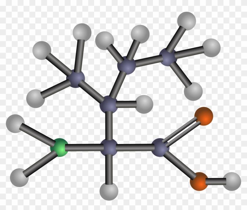 Free Clip Art - Amino Acids: Biochemistry And Applications #25602
