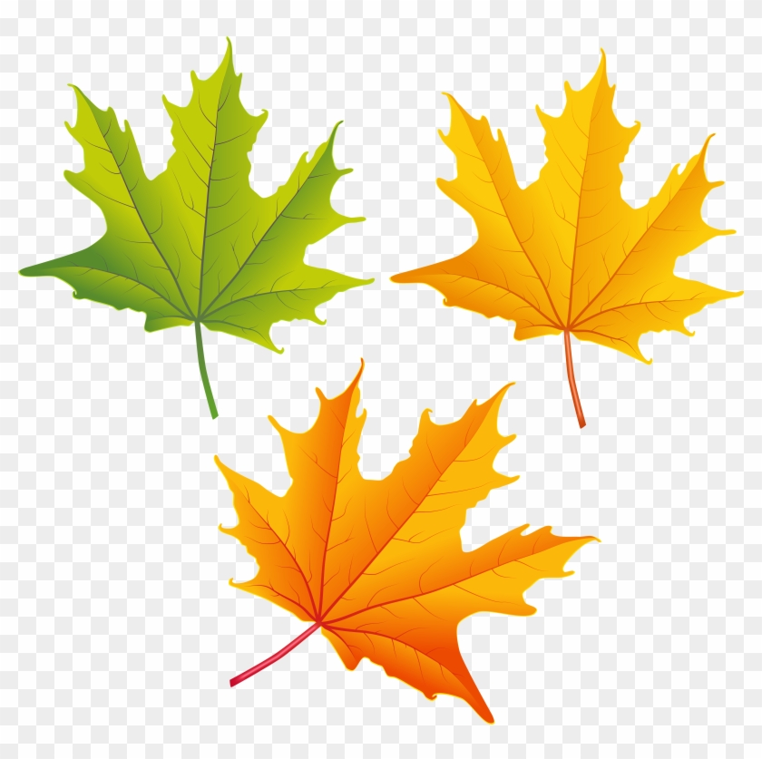 Top 80 Autumn Leaf Clip Art - Autumn Leaf Png Clipart #26648