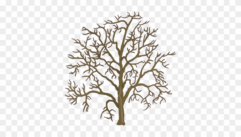 Drawn Dead Tree Dead Plant - Family Tree #26737