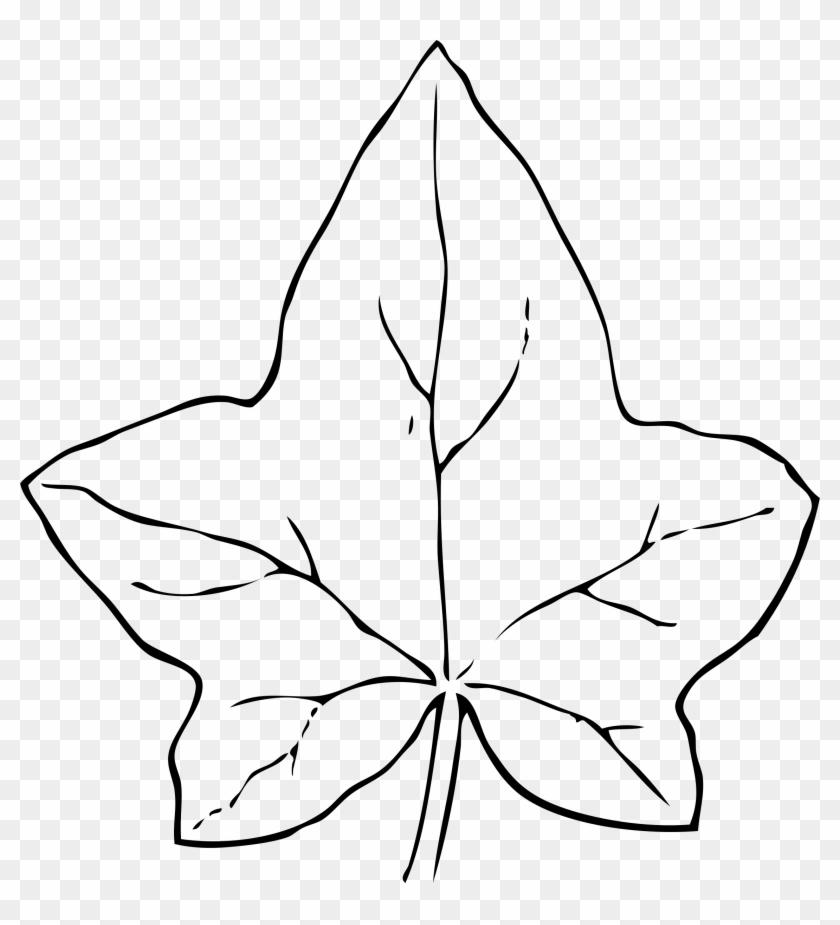 Ivy Leaf Clip Art - Leaf Clip Art #26744