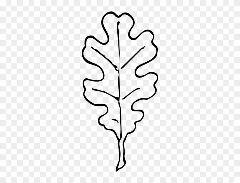 Leaf Outline Cliparts - Oak Leaf Clip Art Black And White #26971